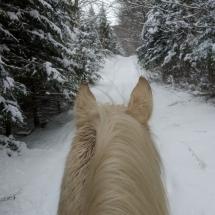 cheval-epinette-beige